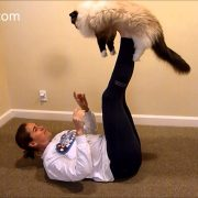 How to Do Airplane with Your Ragdoll Cat – ねこ – ラグドール – Floppycats