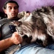 BEAUTIFUL BIG MAINE COON CAT Hélios  like OWNER !! So CUTE Cat breeds !! мейн кун кот