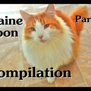 Maine Coon Compilation - Part 1 of Maine Coon Cats doing Maine Coon things