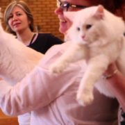 NORWEGIAN FOREST CAT CHAMPIONSHIP 2015
