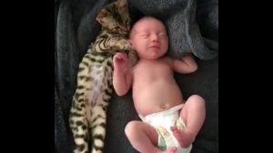 BENGAL CAT AND A BABY