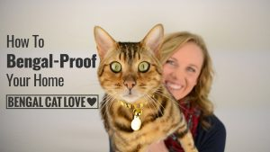 Bengal Cat Personality – How to Bengal Proof Your Home