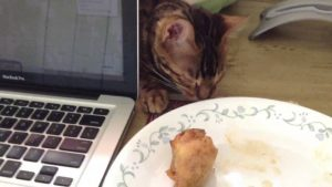 Bengal Cat Tries to Steal Chicken (Video)