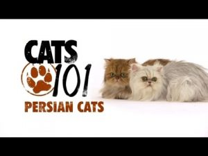 CATS 101 – Persian [ENG]