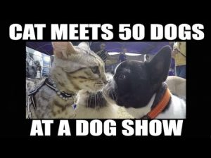 He Took His Cat To A Dog Show — And What Happened Is Obviously Adorable