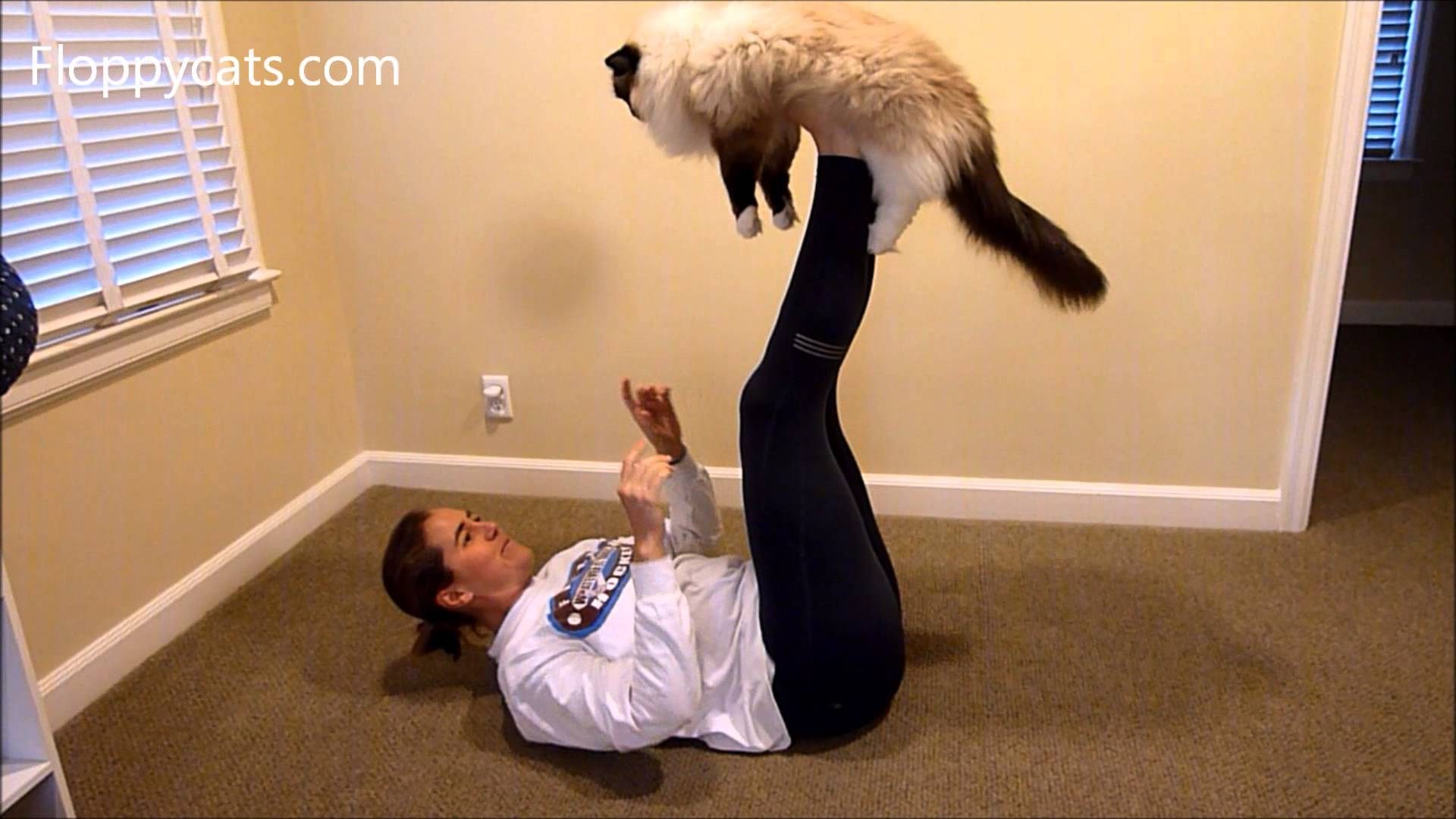 How to Do Airplane with Your Ragdoll Cat - ねこ - ラグドール - Floppycats