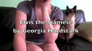 Elvis the Siamese Cat Will Not Be Ignored