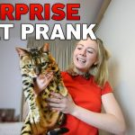 CAT SURPRISE PRANK ON BOYFRIEND!!!