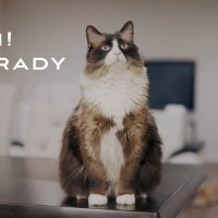 Get To Know Brady - Ragamuffin Cat ( Sony A7sii)