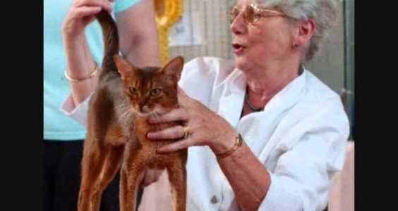 The Abyssinian Cat - Things to Know