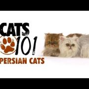 CATS 101 - Persian [ENG]