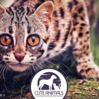 Top 10 Exotic Cats That Are Kept As Pets
