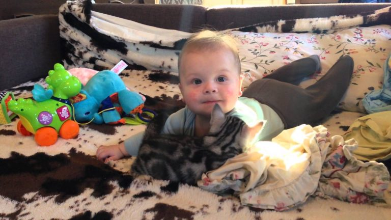 American Shorthair and my baby