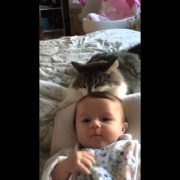 Norwegian forest cat loves baby