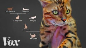 Awesome Designer Cats With Exotic Wild Blood