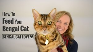 How to Feed Your Bengal Cat?