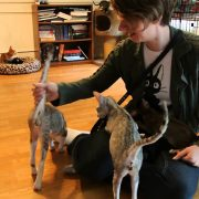 Oriental Shorthair Cats Saying Hello