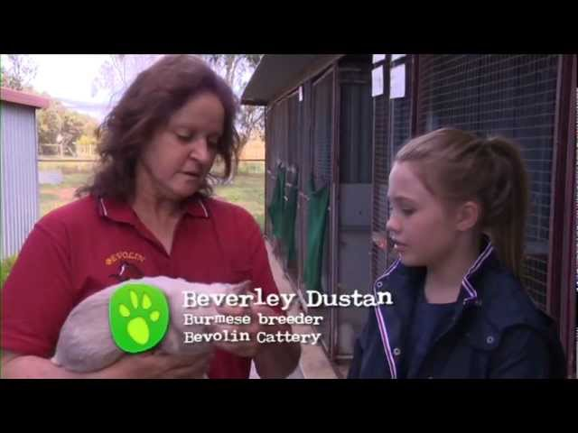 Burmese Cats - All About Animals TV Show